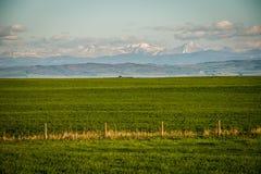 Verde fresco de las tierras de labrantío en Alberta meridional en Canadá fotos de archivo libres de regalías