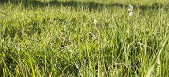Verde fresco del verano imágenes de archivo libres de regalías