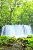 Verde fresco e cachoeira Fotografia de Stock Royalty Free