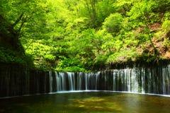 Verde fresco e cascata fotografia stock libera da diritti