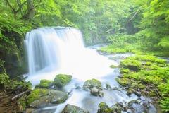 Verde fresco e cascata Fotografie Stock Libere da Diritti