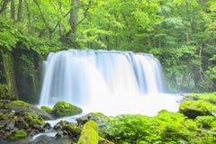 Verde fresco e cascata Immagini Stock Libere da Diritti