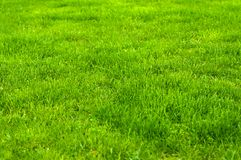Verde fresco fim manicured do gramado acima Fundo grampeado da grama verde fotografia de stock
