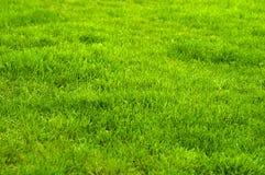 Verde fresco fim manicured do gramado acima Fundo grampeado da grama verde fotos de stock