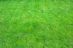 Verde fresco fim manicured do gramado acima Fundo grampeado da grama verde foto de stock royalty free
