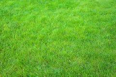 Verde fresco fim manicured do gramado acima Fundo grampeado da grama verde fotos de stock royalty free