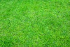 Verde fresco fim manicured do gramado acima Fundo grampeado da grama verde imagem de stock royalty free