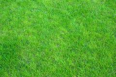Verde fresco fim manicured do gramado acima Fundo grampeado da grama verde fotografia de stock royalty free