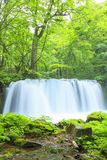 Verde fresco y cascada Fotografía de archivo libre de regalías