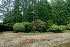 Verde giapponese delle piante degli alberi del giardino rotondo fotografia stock