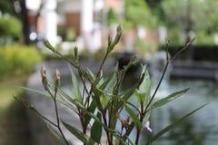 Verde, grama, planta da decoração do jardim Foto de Stock Royalty Free
