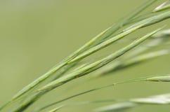 Verde hermoso Imagen de archivo libre de regalías