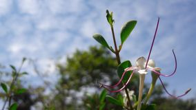 Verde hermoso de la flor del cielo de la planta fotos de archivo