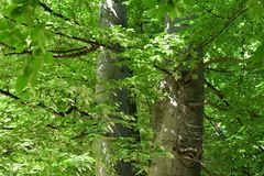 Verde hermoso en el parque foto de archivo libre de regalías