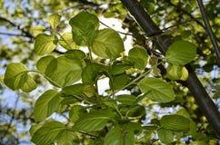 Verde im la tonalità Immagini Stock Libere da Diritti
