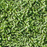 Verde inconsútil de la textura de la hierba Foto de archivo libre de regalías