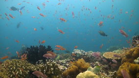 Verde Island, Coral reef in Philippines stock video