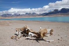 verde laguna пустыни atacama Стоковое Фото