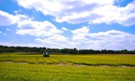 verde luminoso del terreno coltivabile di agricoltura Fotografia Stock Libera da Diritti