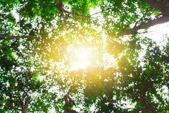 Verde, luminoso, sano e sole di estate per i precedenti Immagini Stock