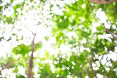 Verde, luminoso, sano e sole di estate per i precedenti Fotografia Stock