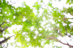 Verde, luminoso, sano e sole di estate per i precedenti Immagine Stock