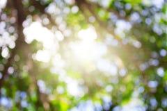 Verde, luminoso, sano e sole di estate per i precedenti Fotografie Stock