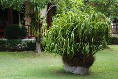 Verde luxúria, jardinando, ajardinando Foto de Stock Royalty Free