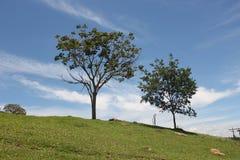 Verde mato azul Céu стоковая фотография rf