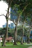 Verde in mezzo della giungla concreta Fotografia Stock