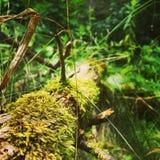 Verde mistico Immagine Stock