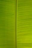 Verde molhe as folhas Imagens de Stock