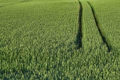 Verde molhe o campo com uma estrada Cena rural, colhendo Fotografia de Stock