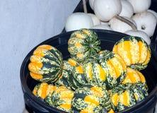 Verde, naranja, y blanco de las calabazas Foto de archivo libre de regalías