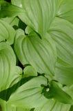 Verde natural Foto de archivo libre de regalías