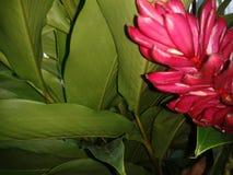 Verde natural Imagens de Stock Royalty Free