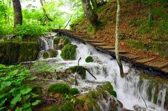 Verde natural de Croatie Parc de los lagos Plitvice foto de archivo
