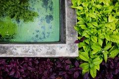 Verde natural e o roxo deixam a beira imagem de stock royalty free