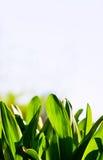 Verde naturale Fotografia Stock