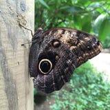 Verde naturale della mosca di bellezza della natura della farfalla Fotografia Stock Libera da Diritti