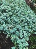 Verde naturaleza Arkivbild