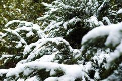 Verde nell'inverno Fotografia Stock