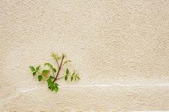 Verde no monótono urbano Imagem de Stock