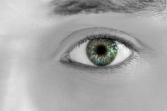 Verde 2 olhar fixamente Imagem de Stock