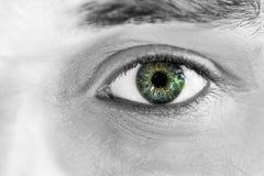 Verde 1 olhar fixamente Foto de Stock Royalty Free