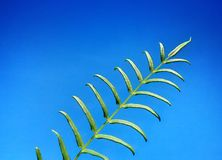 Verde para la tierra Fotografía de archivo libre de regalías