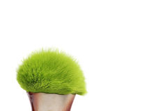 Verde peludo imagens de stock