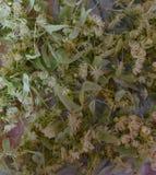 Verde, planta, natureza, folha, flor, musgo, jardim, folhas, macro, frescas, árvore, fim acima, grama, natural, alimento, flores, foto de stock