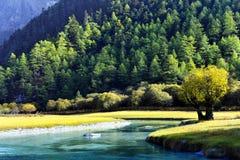 Verde por el río Imagen de archivo libre de regalías