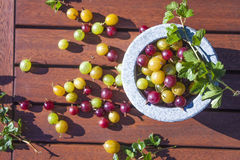 Verde, rosso e giallo dell'uva spina immagine stock libera da diritti